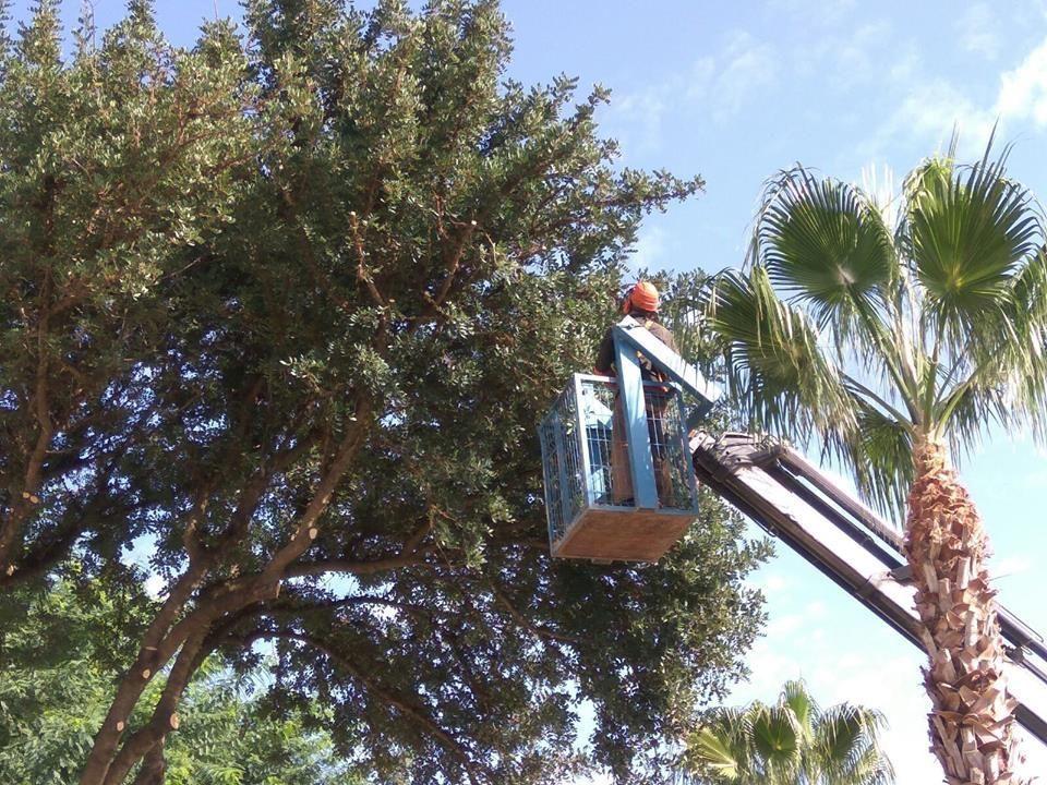 Parques y jardines retira los nidos de la procesionaria for Ornamentacion de jardines