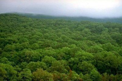 PN Alcornocales bosques
