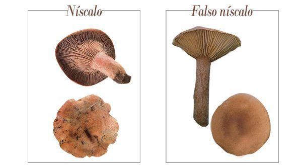 niscalo