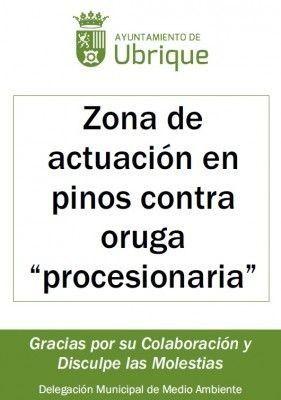 Procesionaria del pino cartel